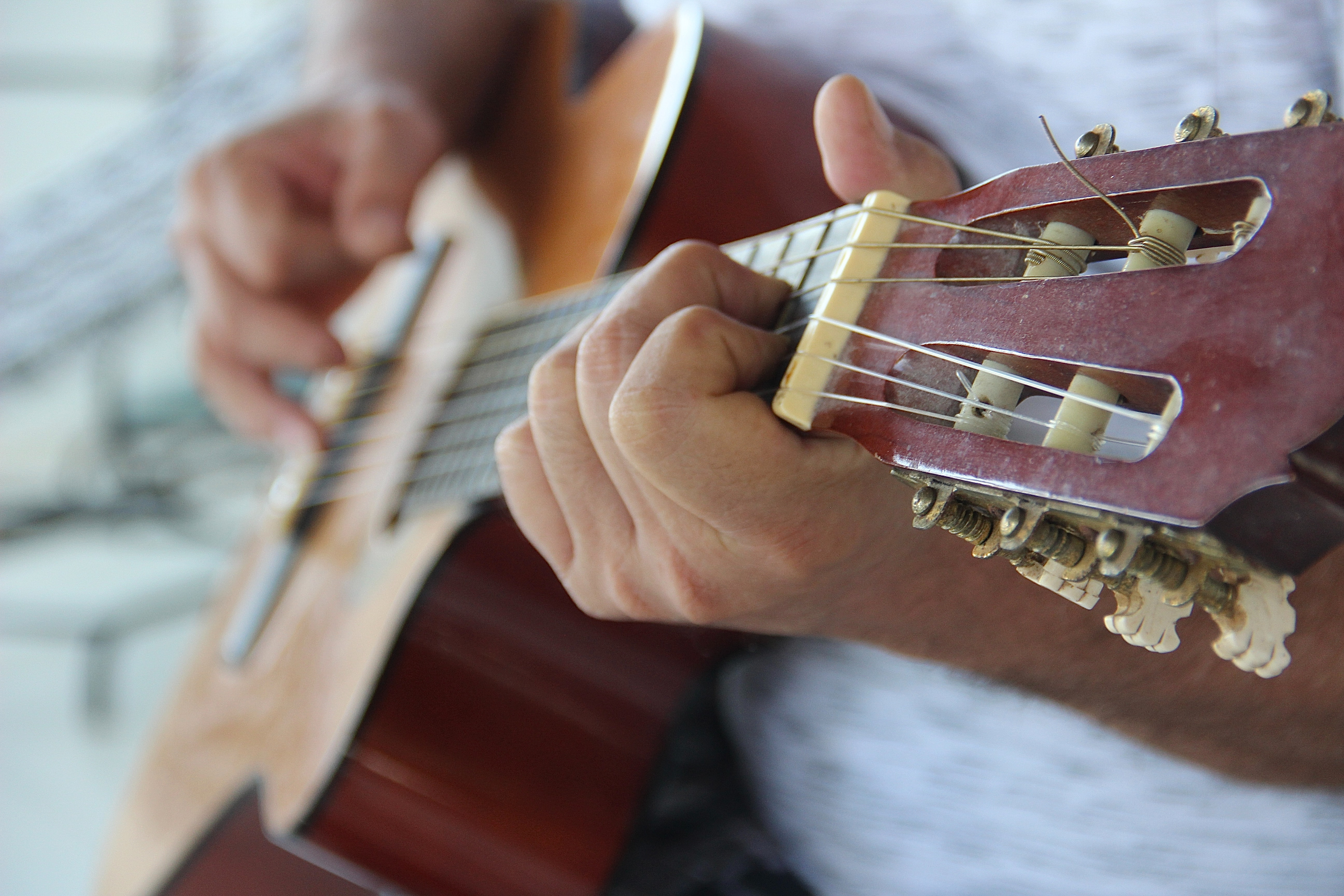 Eco's Got Talent – i vincitori – Musica